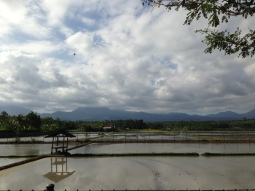 Paddy fields. Eating on one of those little houses is something else.