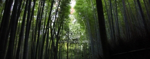 Arashiyama Bamboo Grove Off hours best time to visit